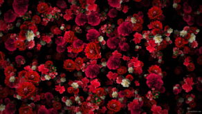 Tiny-Carnation-red-flowers-Falling-Down-Looped-Scene-Decoration-fpdul2-1920_005 VJ Loops Farm