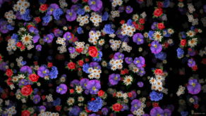 Various-colorful-flowers-falling-down-floral-scene-decoration-xrcrvp-1920_005 VJ Loops Farm